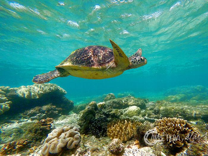 Isla Apo, Filipinas