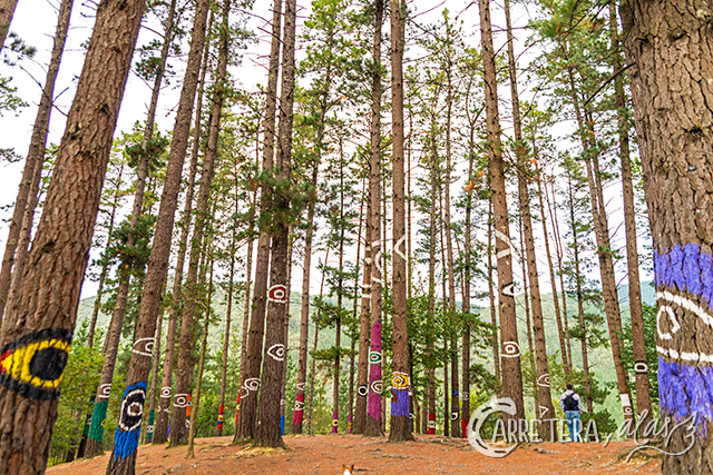 bosque-pintad07