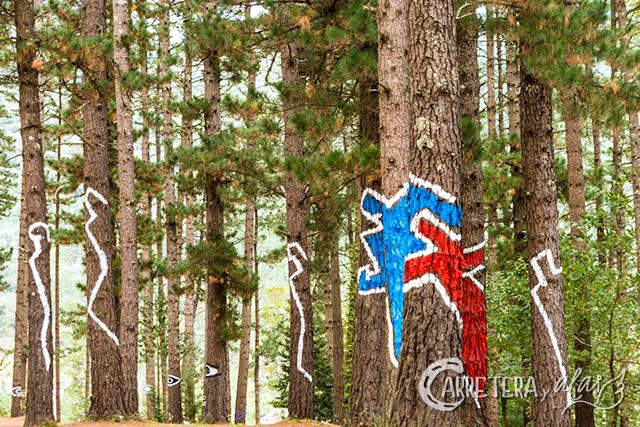 bosque-pintado06