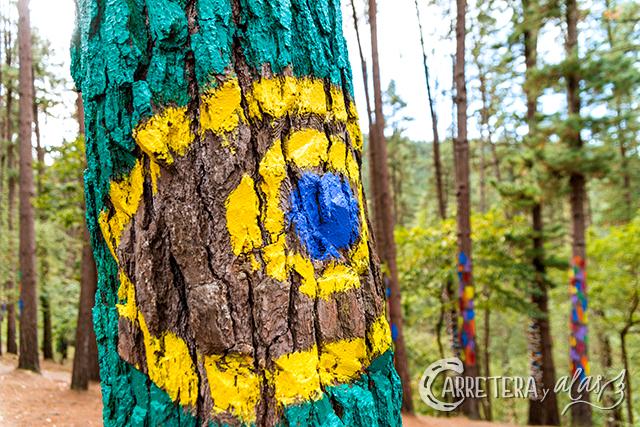 bosque-pintado07
