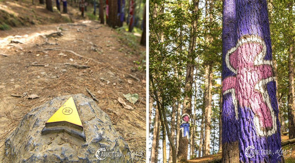 bosque-pintado12