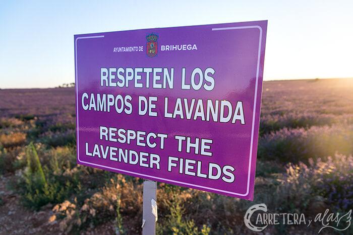Campos de Lavanda Brihuega (Guadalajara)
